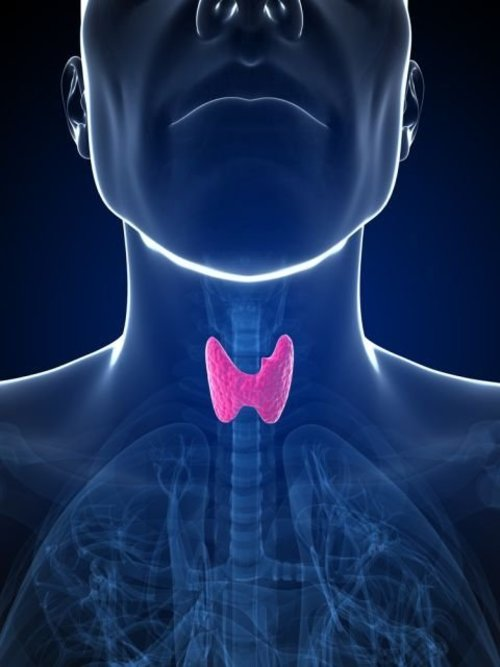 Causas del hipotiroidismo