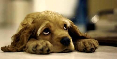 síntomas de la rabia en los perros