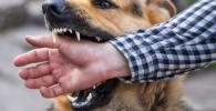 mordedura de perro