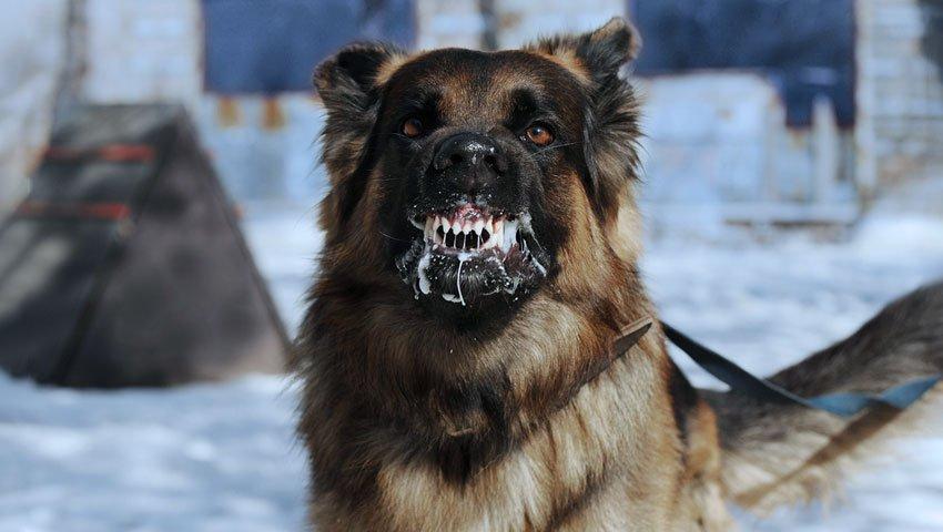 mordedura de perro rabia