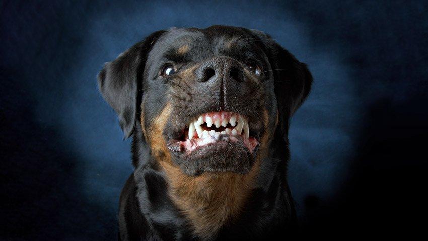 mordida de perro prevención
