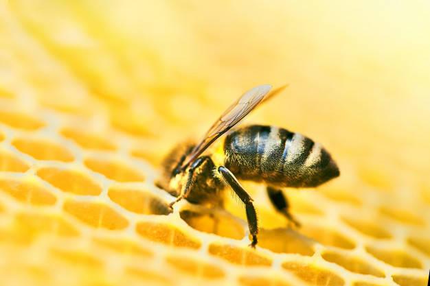 picadura de abeja prevenir