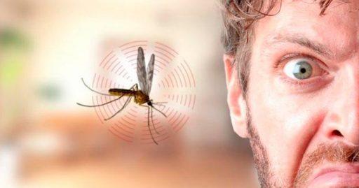 insecto en el oído